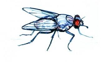 Как мухи отучили двух лентяев от лени - пиренейские сказки
