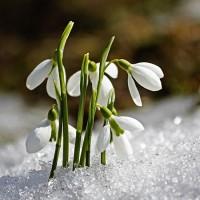 Когда весна очнется - песня о весне