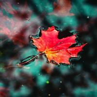 Листики-кораблики - песня про осень