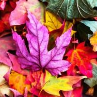 Осень-невидимка - песня про осень