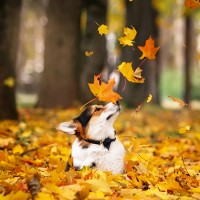 Осень-раскрасавица - песня про осень