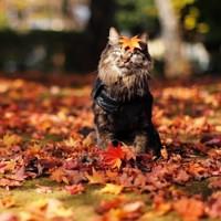 Осенняя загадка - песня про осень