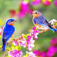 Песенка весны - песня о весне