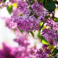 Счастье - песня о весне