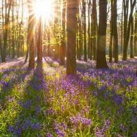 Становится весною - песня о весне