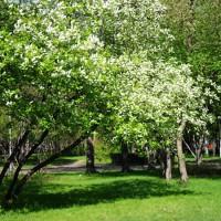 В мае - песня о весне