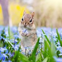 Весна летит на крыльях - песня о весне