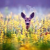 Звуки природы - колыбельная песня природы
