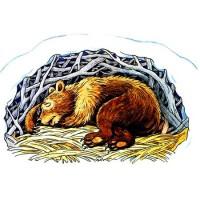 Медвежий сон - новогодняя песня